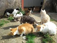 犬猫引き取り施設 レインボーサークル 飼えなくなった犬 猫の里親